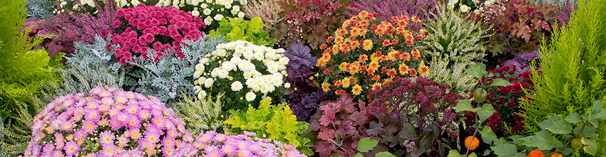 Fall perennials and flowers