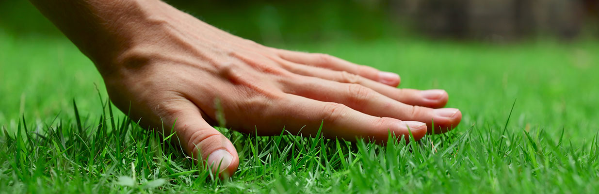A hand over a healthy lawn